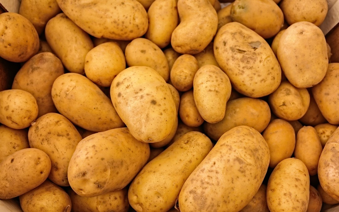 Potato Harvesting Tips