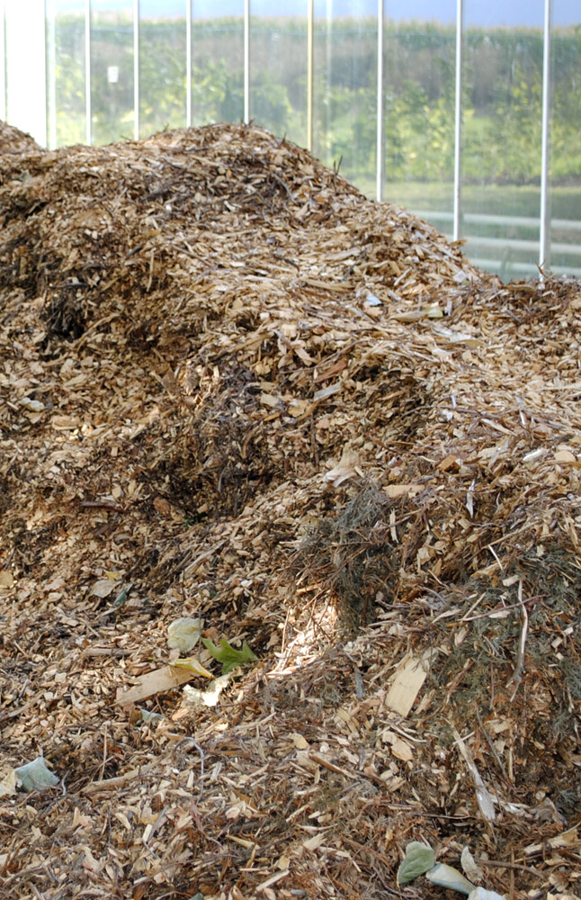 Mulch Pile East of the Greenhouse