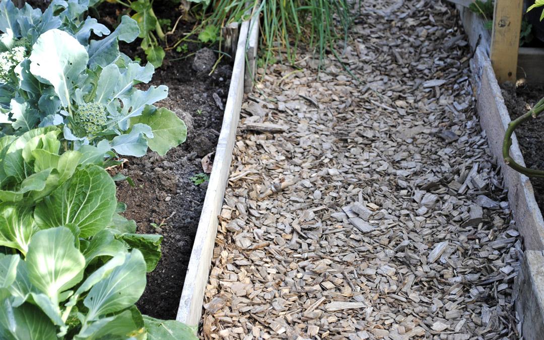 mulch path