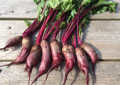 ~ Cylindra beets have delicious greens and extra long roots.