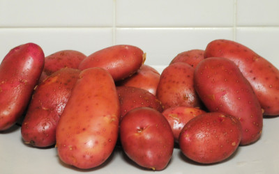 Garden Talk – Potato Workshop