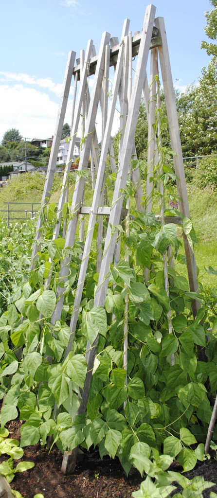 Pole Bean support