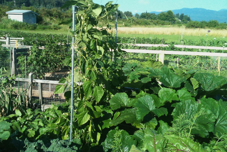 Community garden plot bounty
