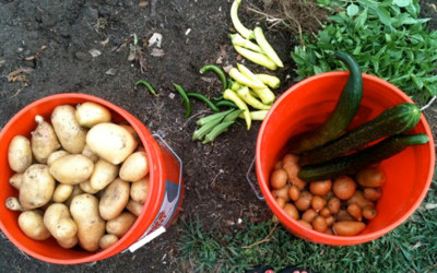 Food Safety in Community Gardens