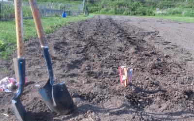 First Potato Planting