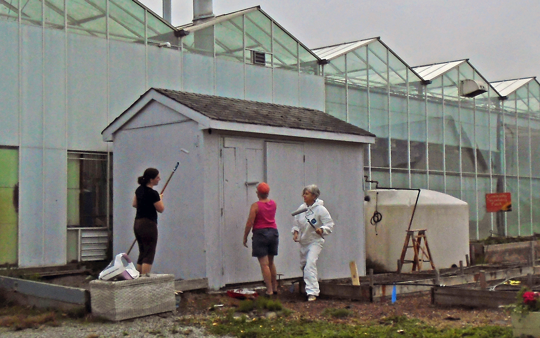 Painting the garden shed