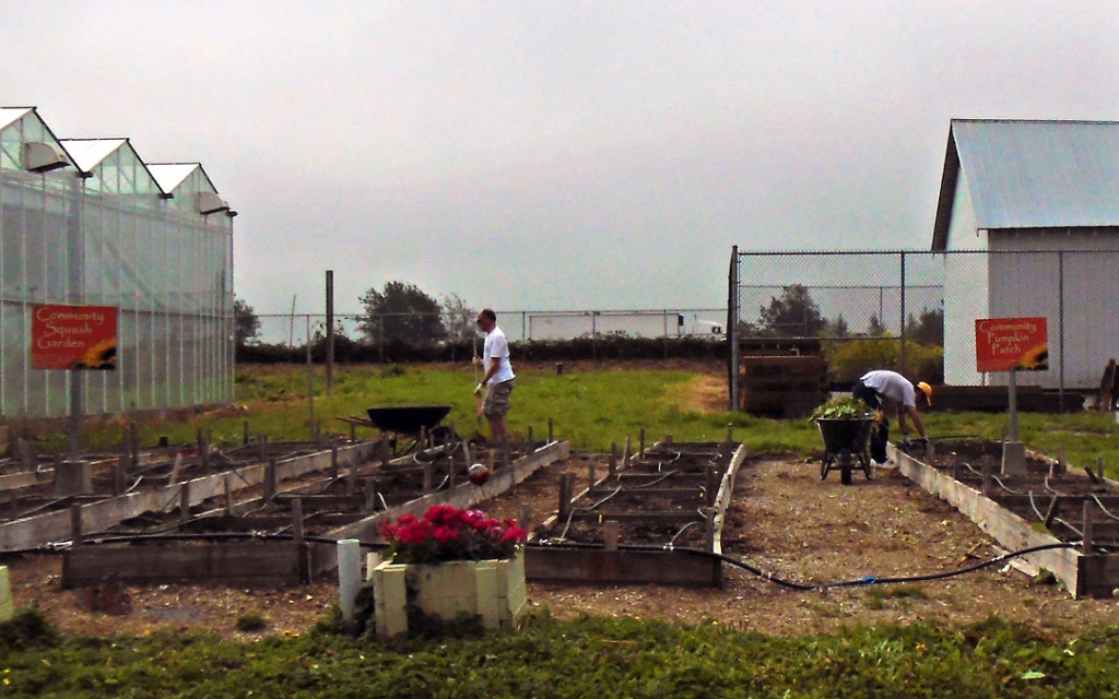summer squash patch cleanup