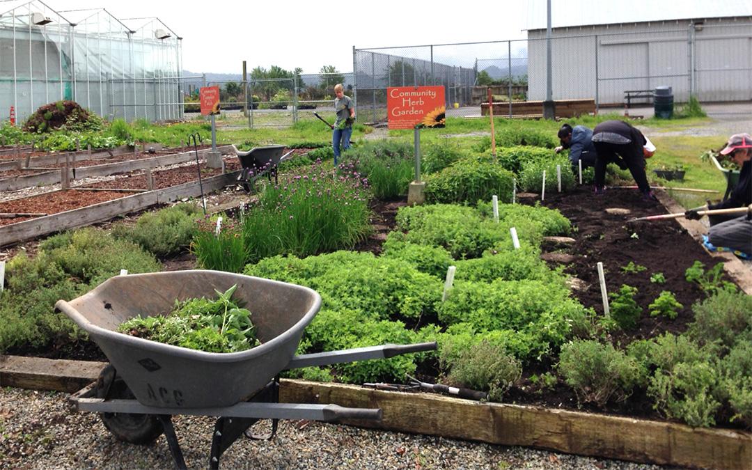 Herb Garden Work Bee 2017