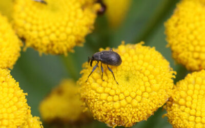 Insect Science at the Garden